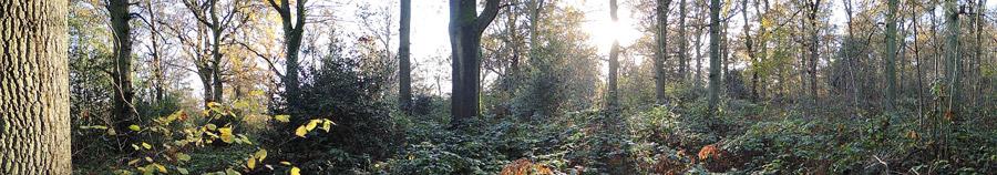 Broadleaved-woodland