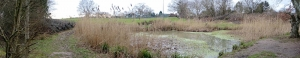 Great crested newt habitat