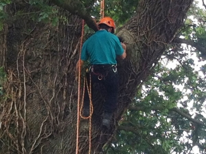 Tree climbing inspection for bats