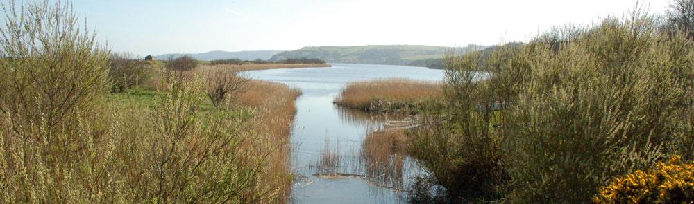 Water vole habitat