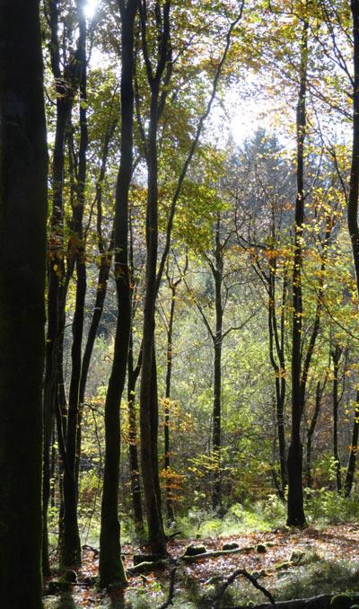Habitat regulations assessment